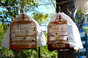 bamboo bird cages Hua Mei Bird Garden New York City