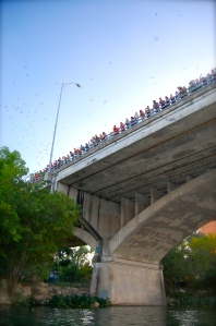 Bats under Congress Bridge Austin Texas